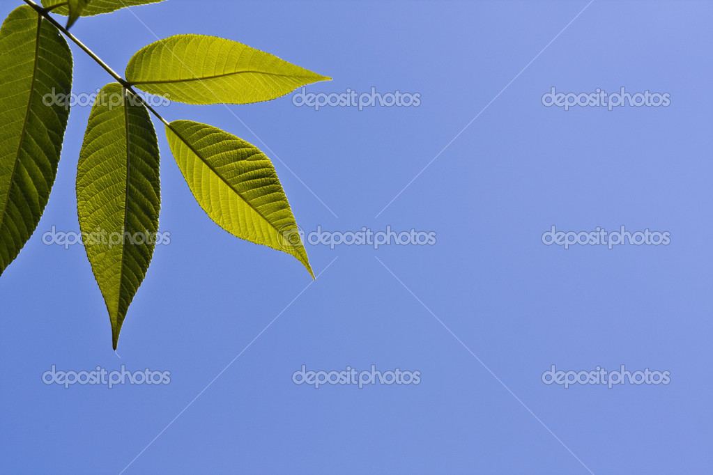 Close up of new young leaves against the blue sky — Stock Photo #3437096