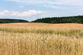 Rural summer lsndscape — Stock Photo