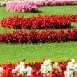 Lawn with flowers — Stock Photo