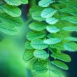 Green leaves abstract — Stock Photo
