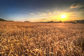 Sunset landscape in Poland — Stock Photo