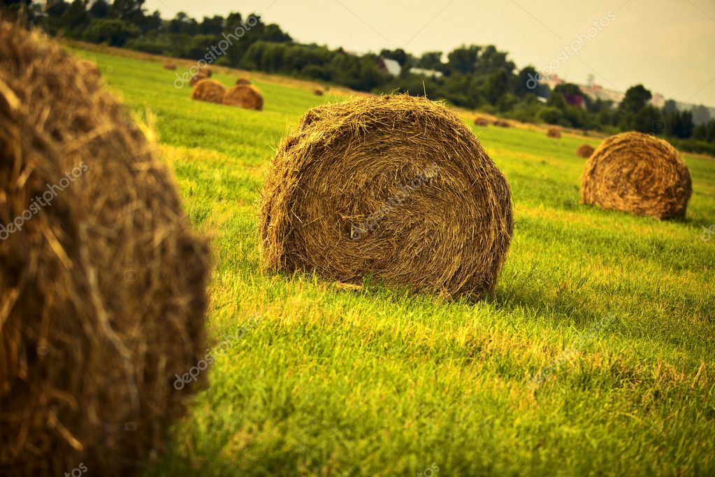 Haystack on a field. Vibrant colors. — Stock Photo #3071622