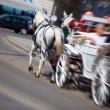koń z trenerem na ulicy miasta — Zdjęcie stockowe