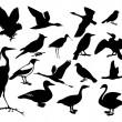 Collection of silhouettes of birds — Vettoriali Stock