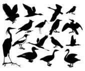 Collection of silhouettes of birds — Stock Vector
