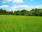 Green meadow in the mountains — Stock Photo