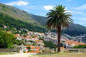 Dubrovnik old town, Croatia — Stock Photo