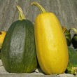 Stock Photo: Large vegetable marrows