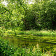 Stock Photo: The river in wood