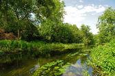O rio madeira — Foto Stock