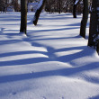 Snow background — Stock Photo #3601453
