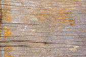 Rough painted plank — Stock Photo