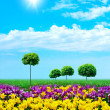 Green grass and young tulips on blue sky - Stock Photo