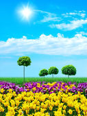 Green grass and young tulips on blue sky — Stock Photo