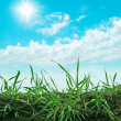 Stock Photo: Green grass on blue sky