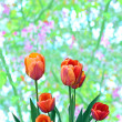 Red tulips — Stock Photo #2889802