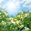 Beautiful spring flowers on blue sky — Stock Photo