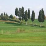 Italy. Tuscany region — Stock Photo #3018927