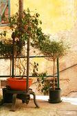 Italy. Tree against yellow wall — Stock Photo