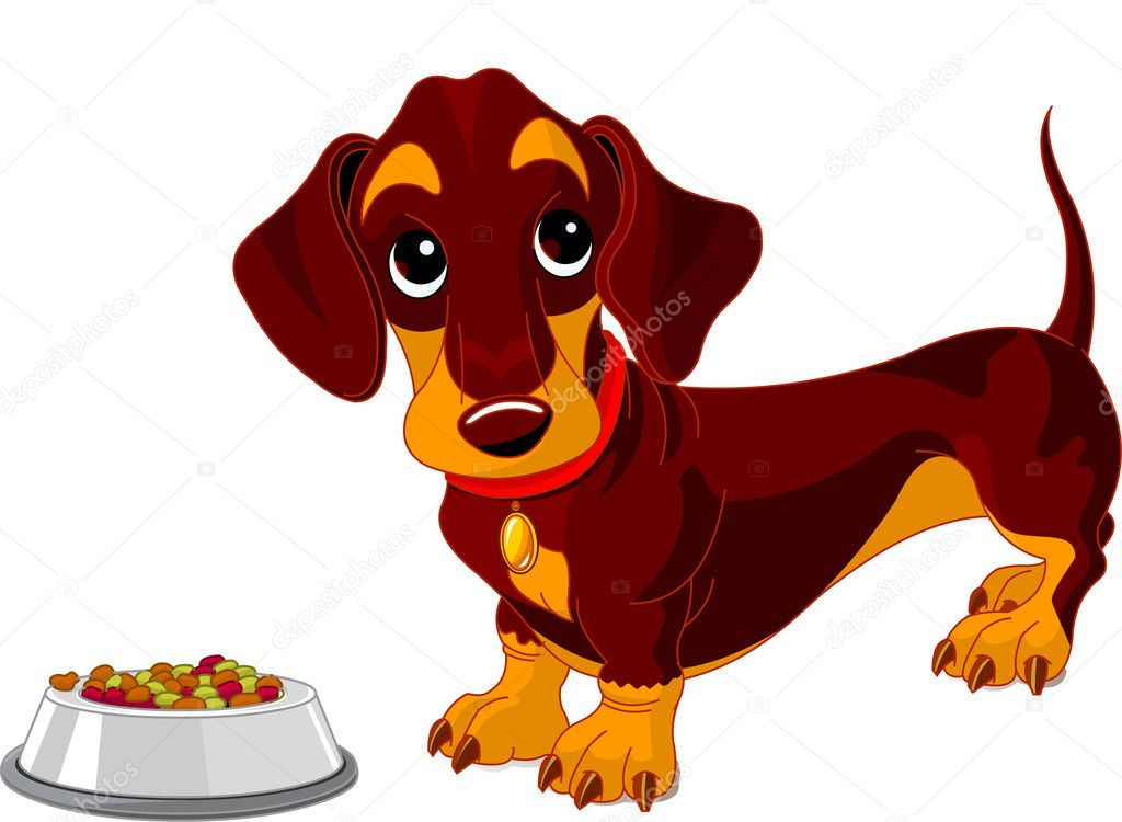 Cute dachshund dog near bowl of dog food — Stock Vector #2891871
