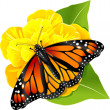 Monarch butterfly on the flower — Stock Photo