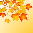 Autumn leaves background — Stockvectorbeeld