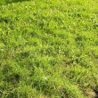 Grass — Stock Photo #2721658