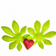 Leaves with heart — Stock Photo