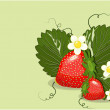Strawberries — Imagen vectorial