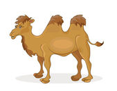 Camello — Vector de stock
