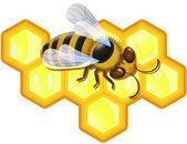Nids d'abeille et abeille vector — Vecteur