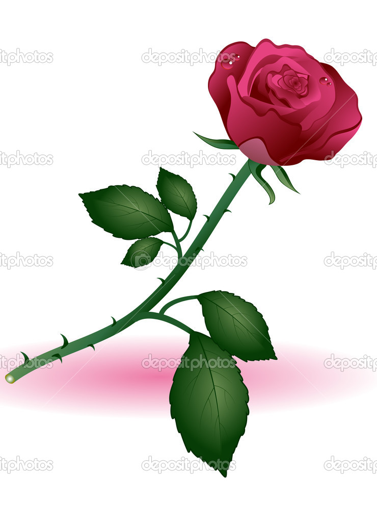 Red rose on a white background — Stock Vector #3603743