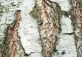 структура коры — Стоковое фото