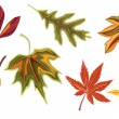 Various autumn fall leaves — Stock Vector