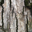 Royalty-Free Stock Photo: Tree Bark Texture