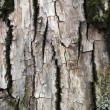 Tree Bark Texture — Stock Photo #2771004