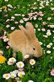 Cute Rabbit in Grass — Stock Photo