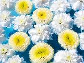 Beautiful Flowers on Water — Stock Photo