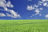 Beautiful Summer Field — Stock Photo