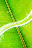 Refreshing Green Background — Stock Photo