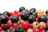 Black, Red And White Currants — Stock Photo