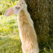 Cute Rabbit Standing on Hind Legs — Stock Photo #3612666