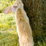 Cute Rabbit Standing on Hind Legs — Stock Photo