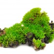 Green Moss — Stock Photo #3734098