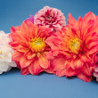 Multicolored Dahlias — Stock Photo #3770291