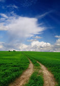 Road Through Field — Stock Photo