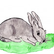 Drawn hare — Stock Photo