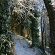 San Marino forest - Stock Photo