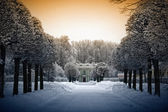 Beautiful winter in Kuskovo — Stock Photo