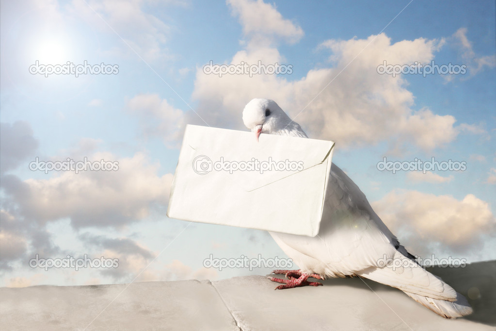 White Homing pigeon with letter. Ancient card — Stock Photo #3098885